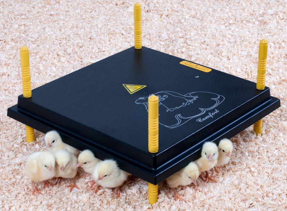 Varmelampe kyllinger